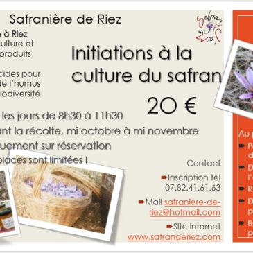 Alpes de Haute Provence | Visites et initiations, durant la récolte du safran